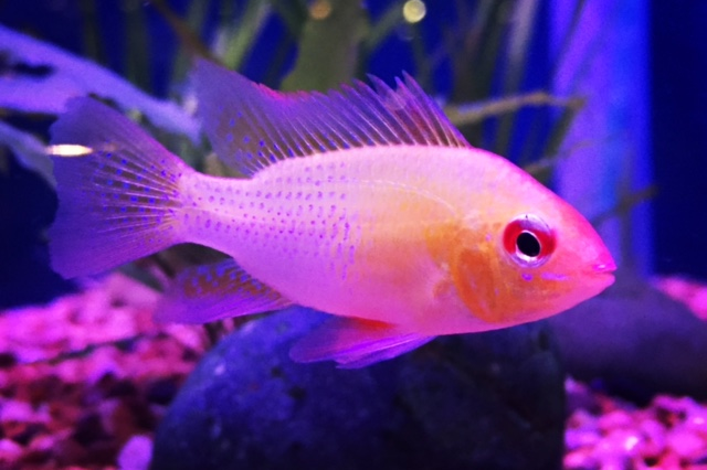 About Aquarium Liverpool : Tropical & Cold Water Fish : Call 0151